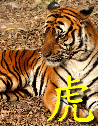 wasser tiger und feuer pferd